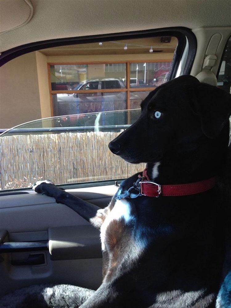 perros-veterinario-7