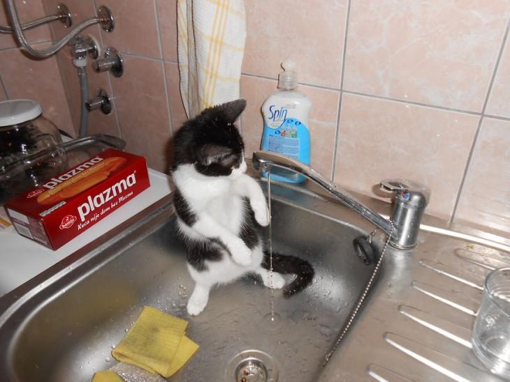 Gatos-que-aman-bañarse-1-730x548