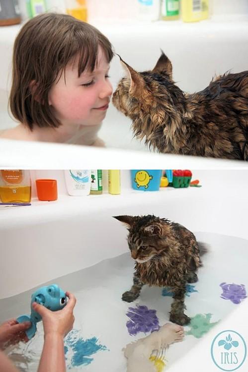Gatos-que-aman-bañarse-20-499x750
