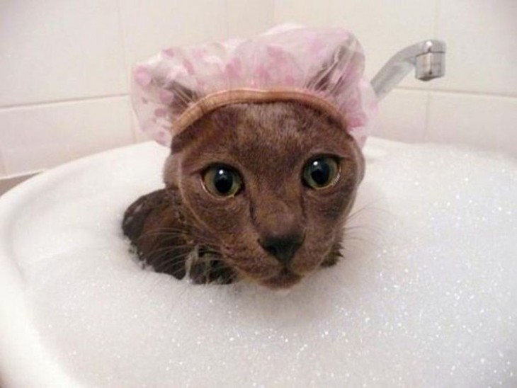 Gatos-que-aman-bañarse-6-730x548