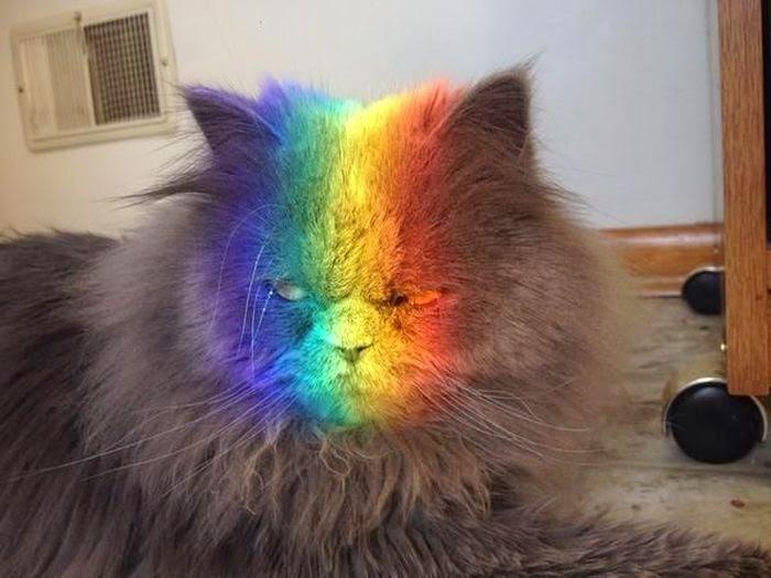 gatoss-3