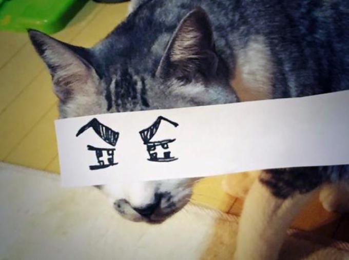 mascotas-con-ojos-raros-10