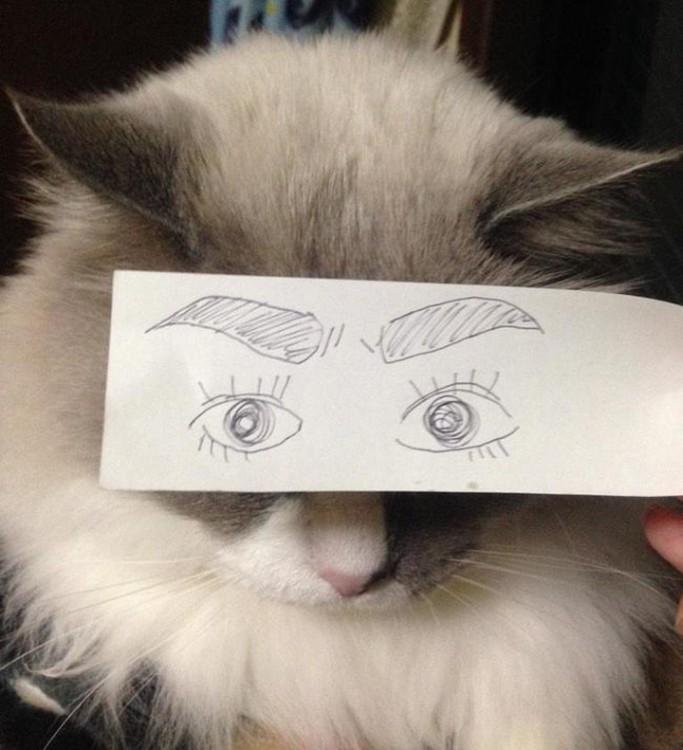 mascotas-con-ojos-raros-11-683x750