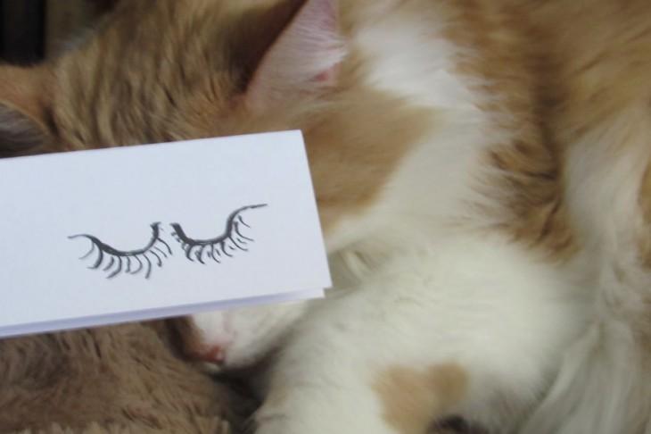 mascotas-con-ojos-raros-13-730x486