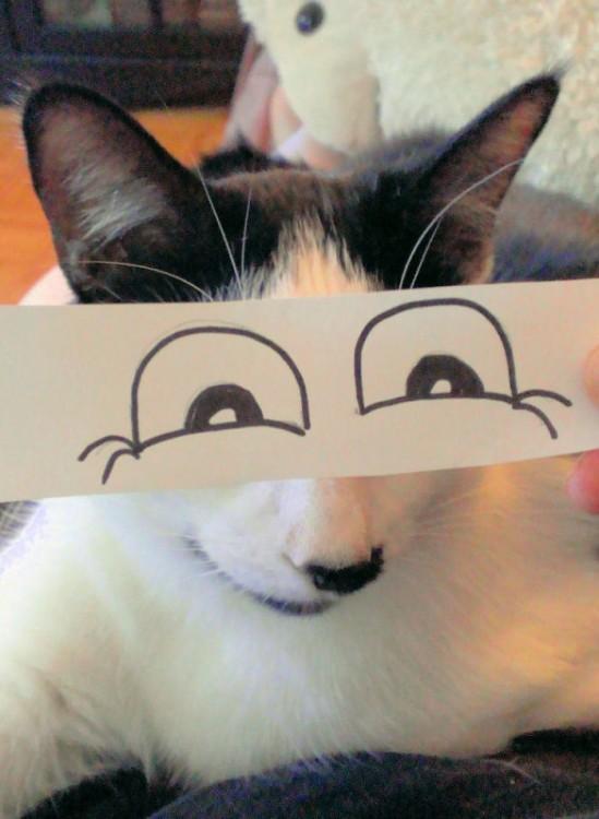 mascotas-con-ojos-raros-15-549x750