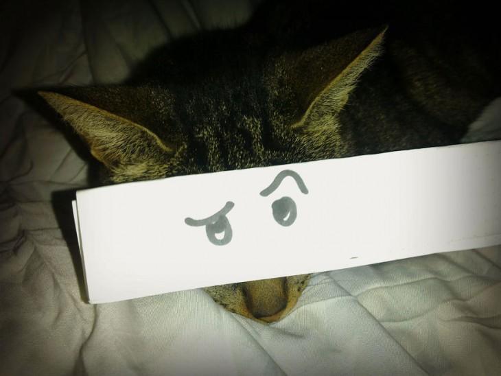 mascotas-con-ojos-raros-16-730x548