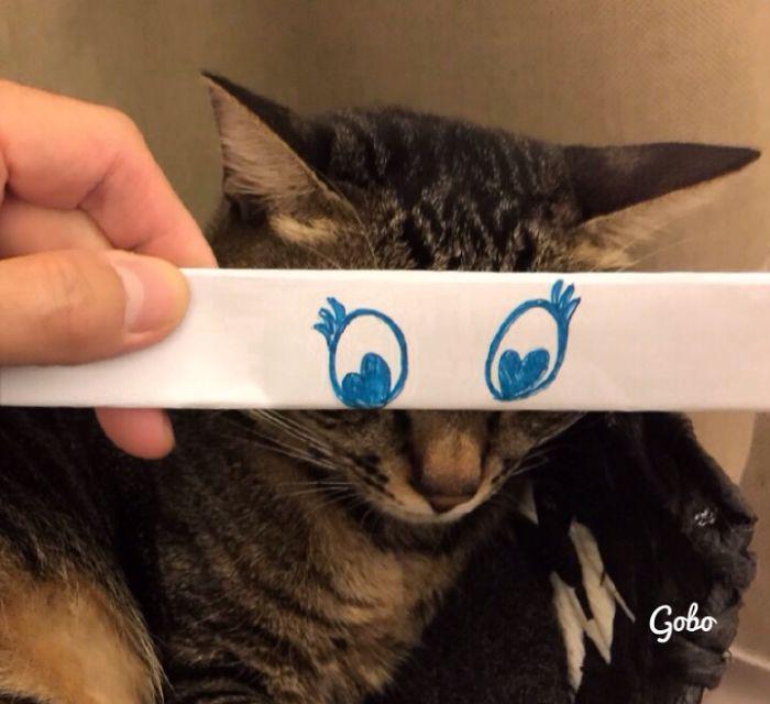 mascotas-con-ojos-raros-20