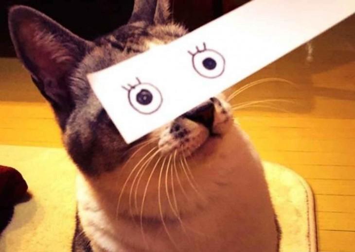 mascotas-con-ojos-raros-21-730x519