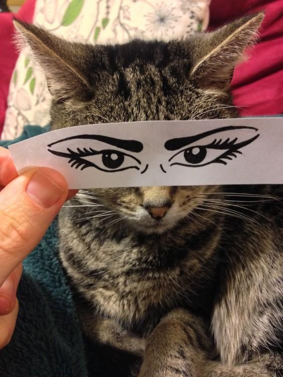 mascotas-con-ojos-raros-22-563x750