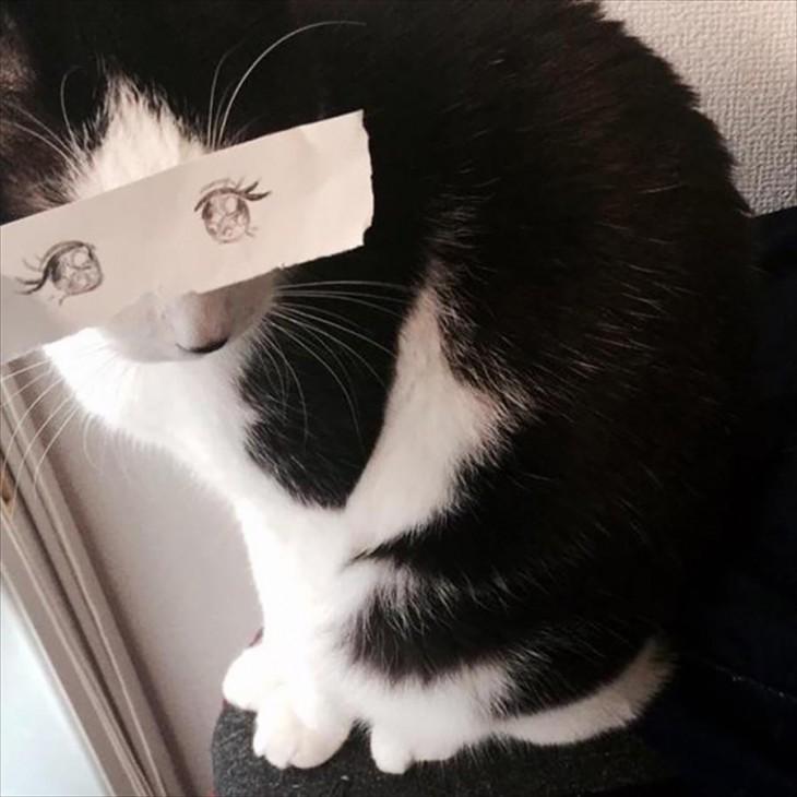 mascotas-con-ojos-raros-23-730x730