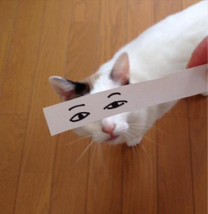 mascotas-con-ojos-raros-24-730x750