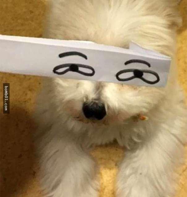mascotas-con-ojos-raros-3