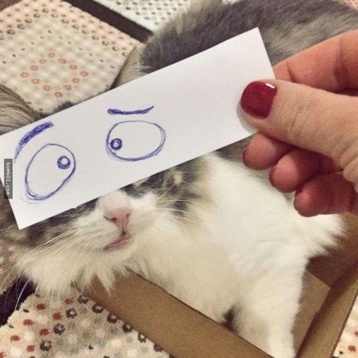 mascotas-con-ojos-raros-4-730x730