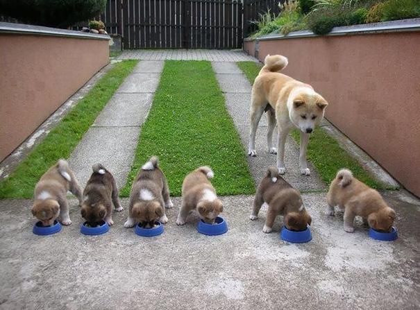 mamás-perro-orgullosas-3