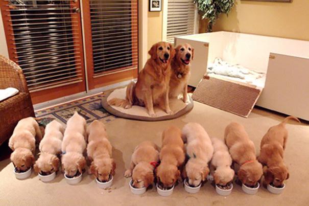mamás-perro-orgullosas-42