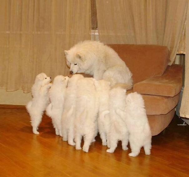 mamás-perro-orgullosas-44
