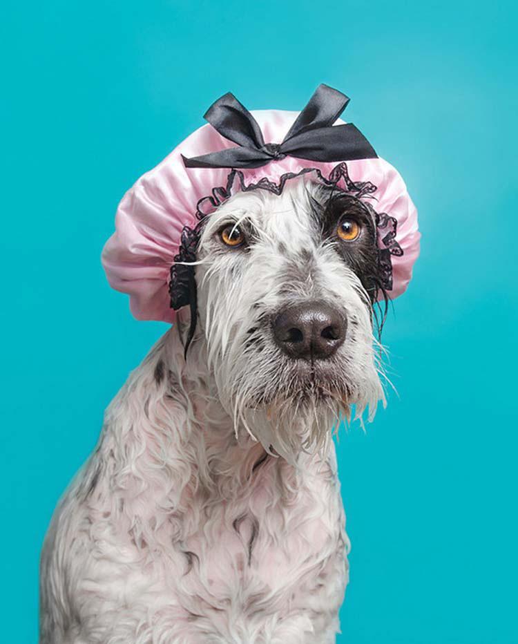 perros-mojados-1