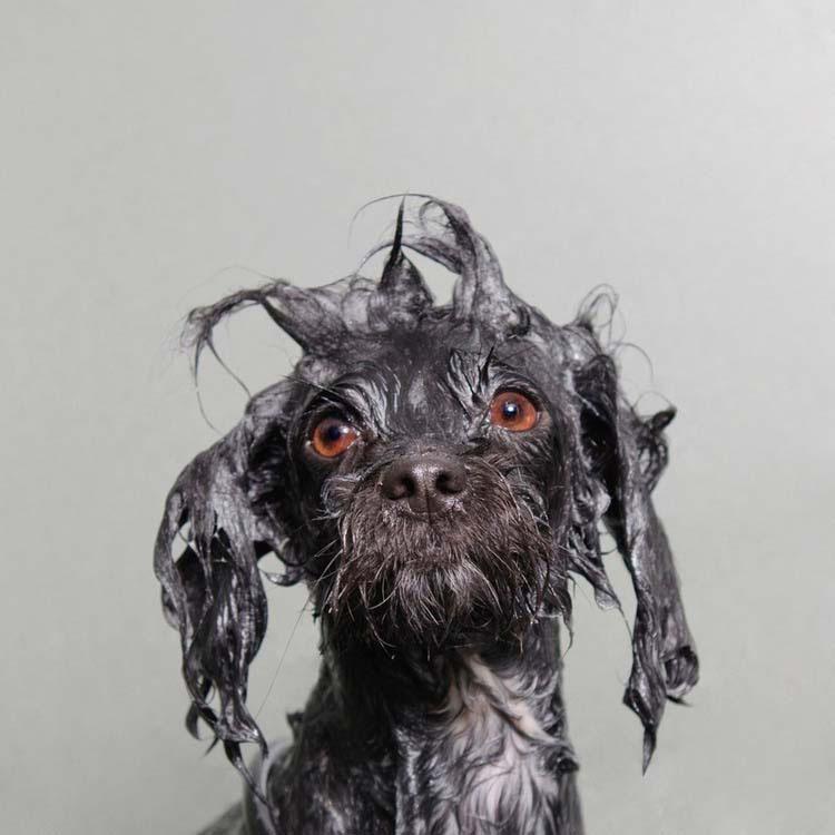 perros-mojados-2