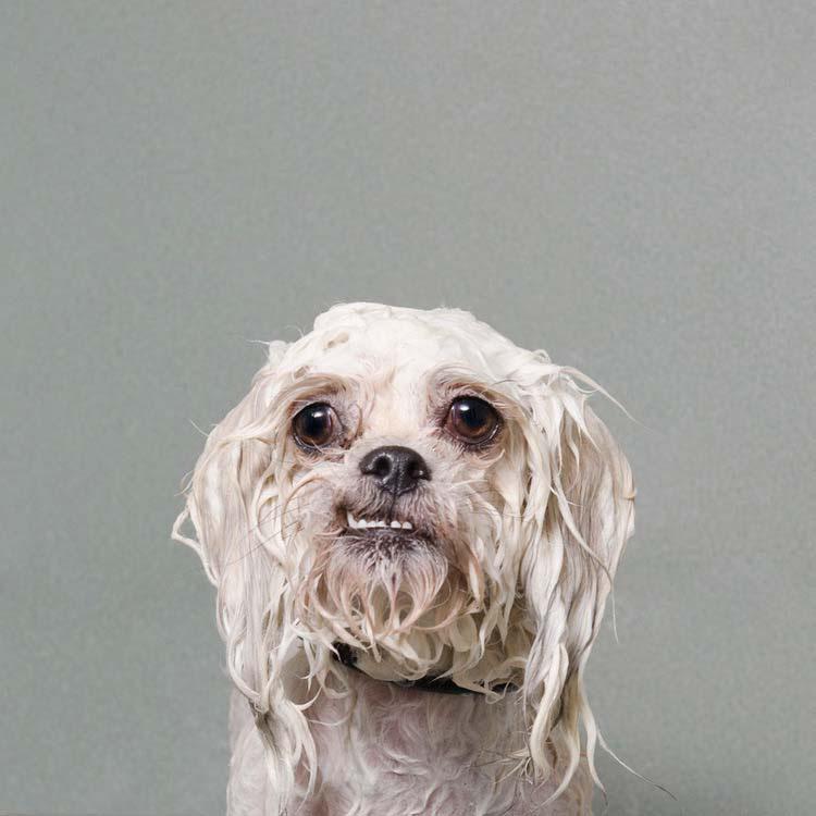 perros-mojados-3