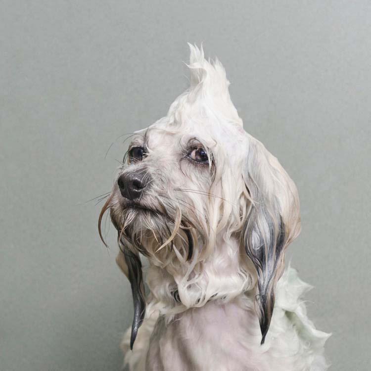 perros-mojados-4