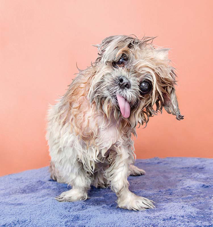 perros-mojados-5