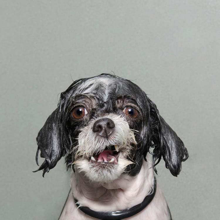 perros-mojados-8