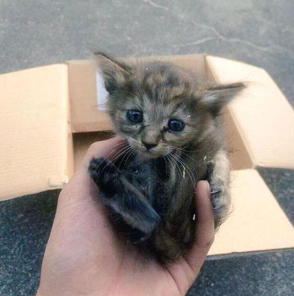 gato-komari-adoptado-familia-hurones-10