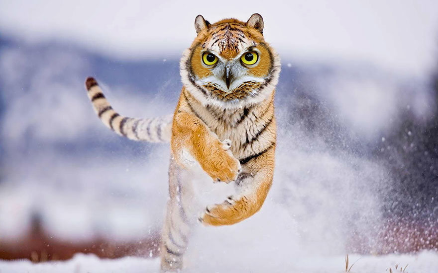 hibridos-animales-13
