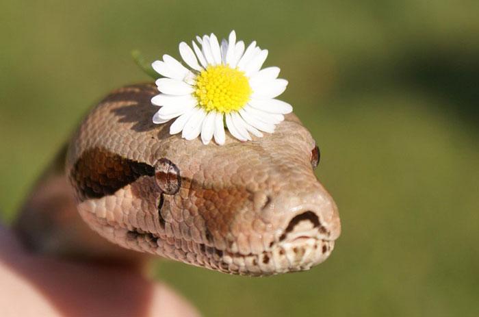 serpientes-llevando-sombrero-11