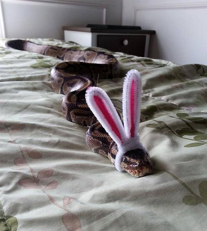 serpientes-llevando-sombrero-15