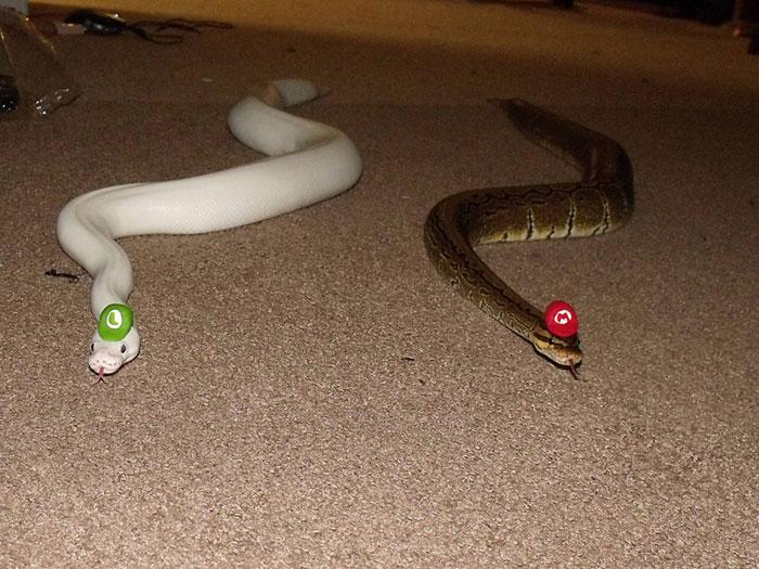 serpientes-llevando-sombrero-2