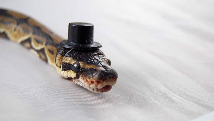 serpientes-llevando-sombrero-4