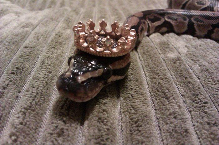 serpientes-llevando-sombrero-6