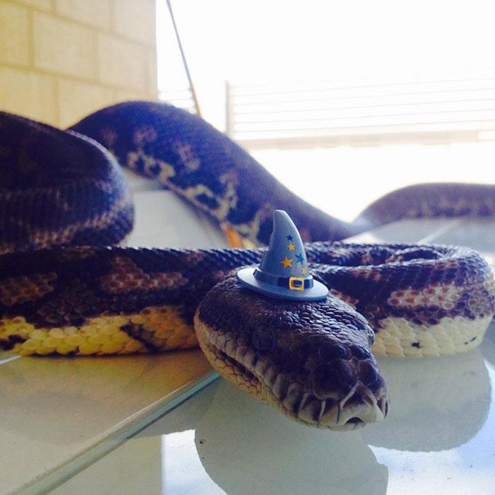 serpientes-llevando-sombrero-7