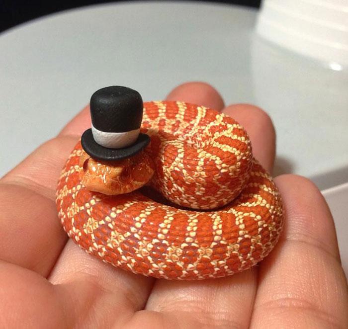 serpientes-llevando-sombrero-9