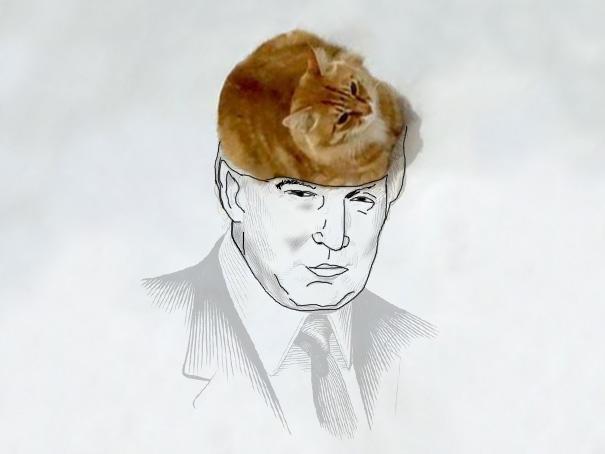 meme-foto-gato-dibujos-divertidos-6