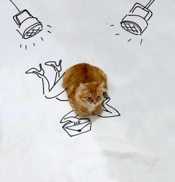 meme-foto-gato-dibujos-divertidos-7