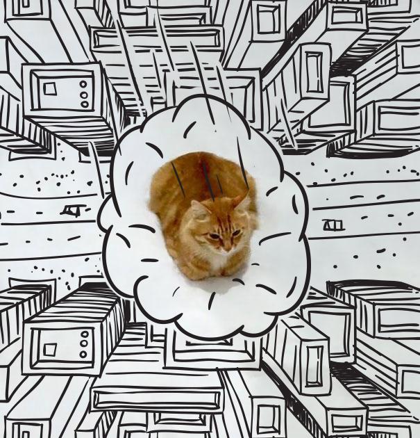 meme-foto-gato-dibujos-divertidos-9