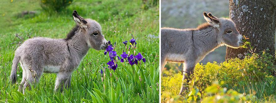 animales-oliendo-flores-1
