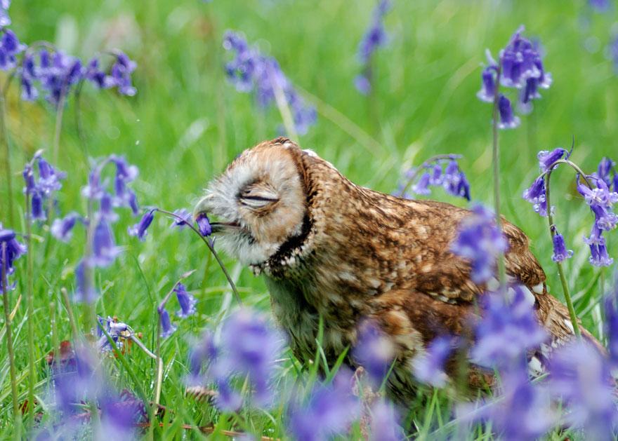 animales-oliendo-flores-3