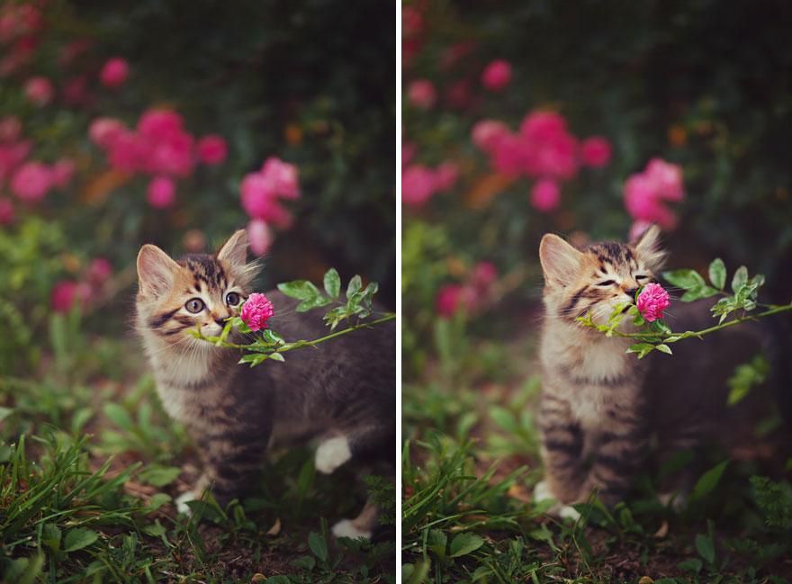 animales-oliendo-flores-5