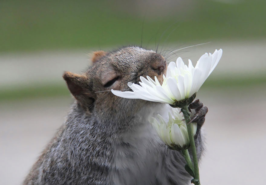 animales-oliendo-flores-9