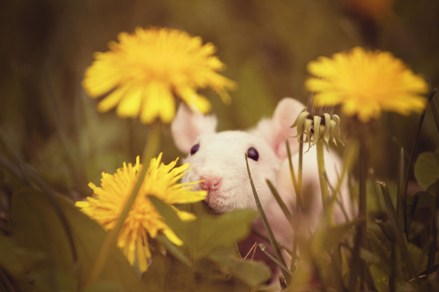 animals-smelling-flowers-141__880