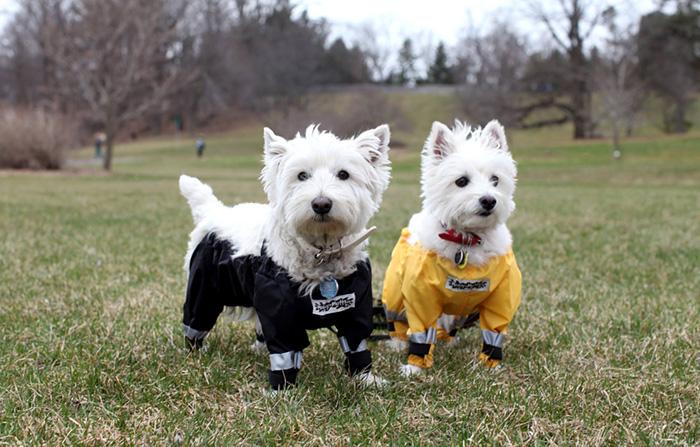pantalones-perros-muddy-mutt-apparel-3