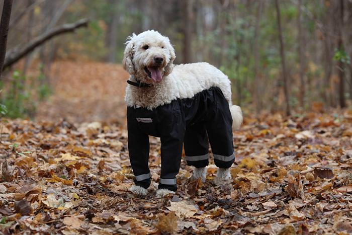 pantalones-perros-muddy-mutt-apparel-4