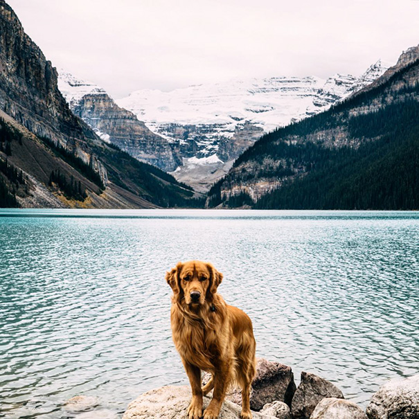 perro-aspen-viajes-aventura-hunter-lawrence-1