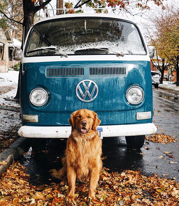 perro-aspen-viajes-aventura-hunter-lawrence-11