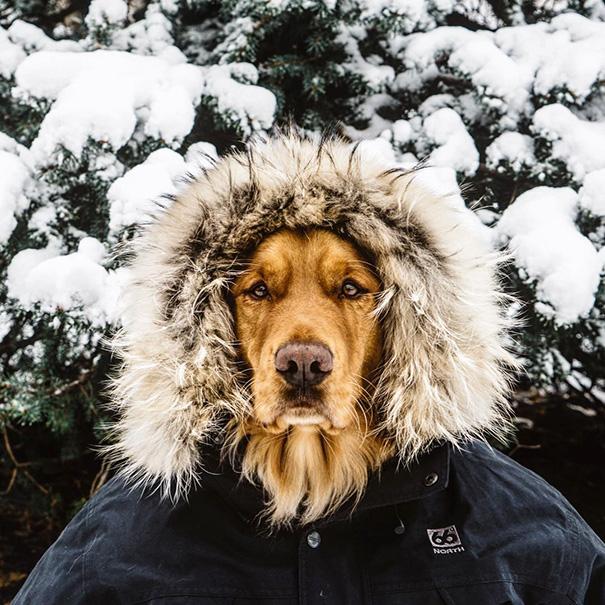 perro-aspen-viajes-aventura-hunter-lawrence-15