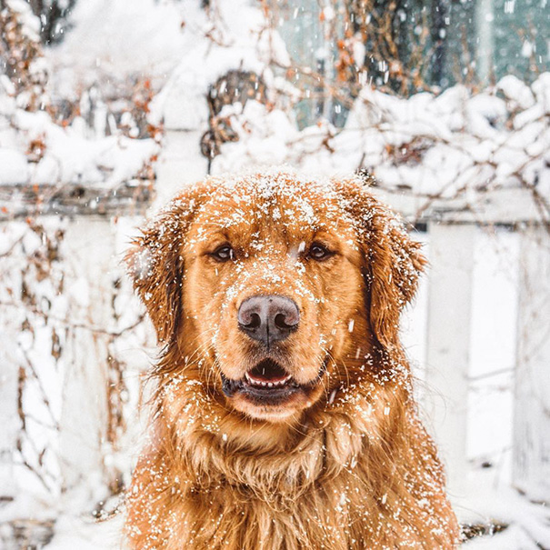perro-aspen-viajes-aventura-hunter-lawrence-19