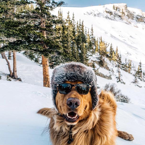 perro-aspen-viajes-aventura-hunter-lawrence-2